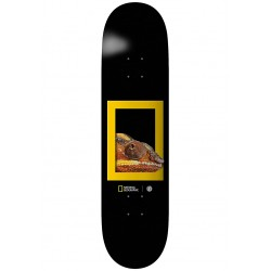 BOARD ELEMENT NAT GEO DRAGON 8.25