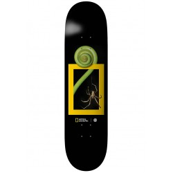 BOARD ELEMENT NAT GEO SPIDER 8