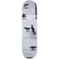 BOARD POLAR PAUL GRUND DOG STUDIES - 8.75